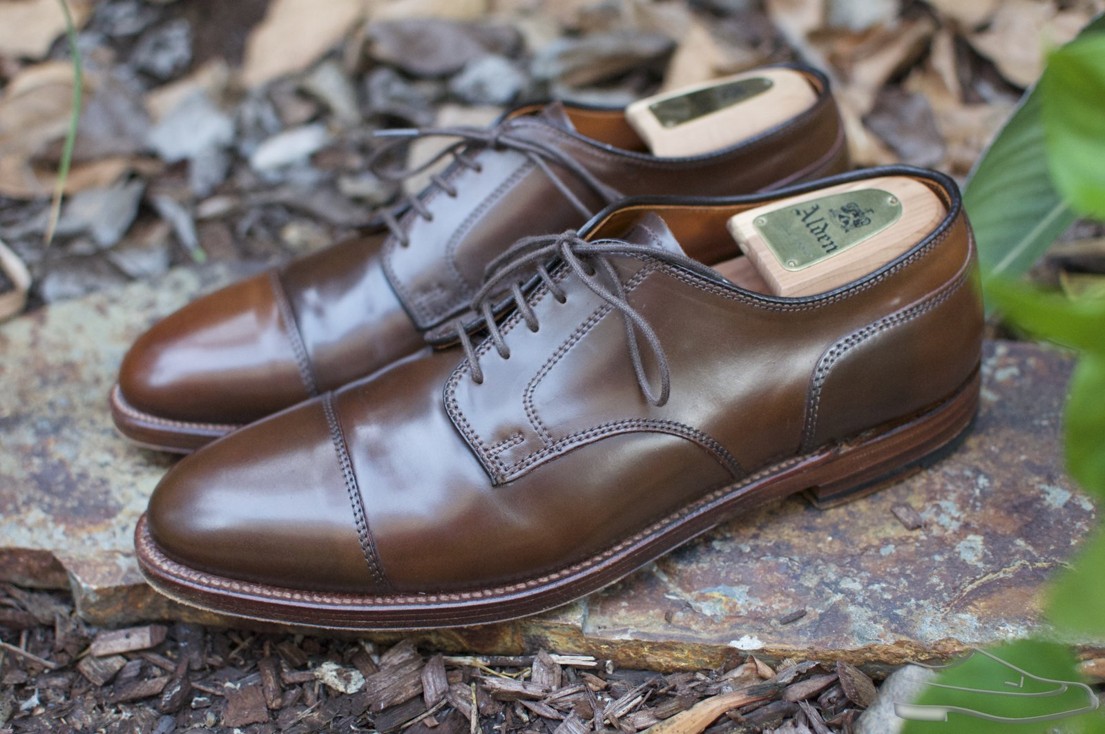 Alden Cigar Shell Cordovan CT Blucher - 2020-09-24 - 2.jpg