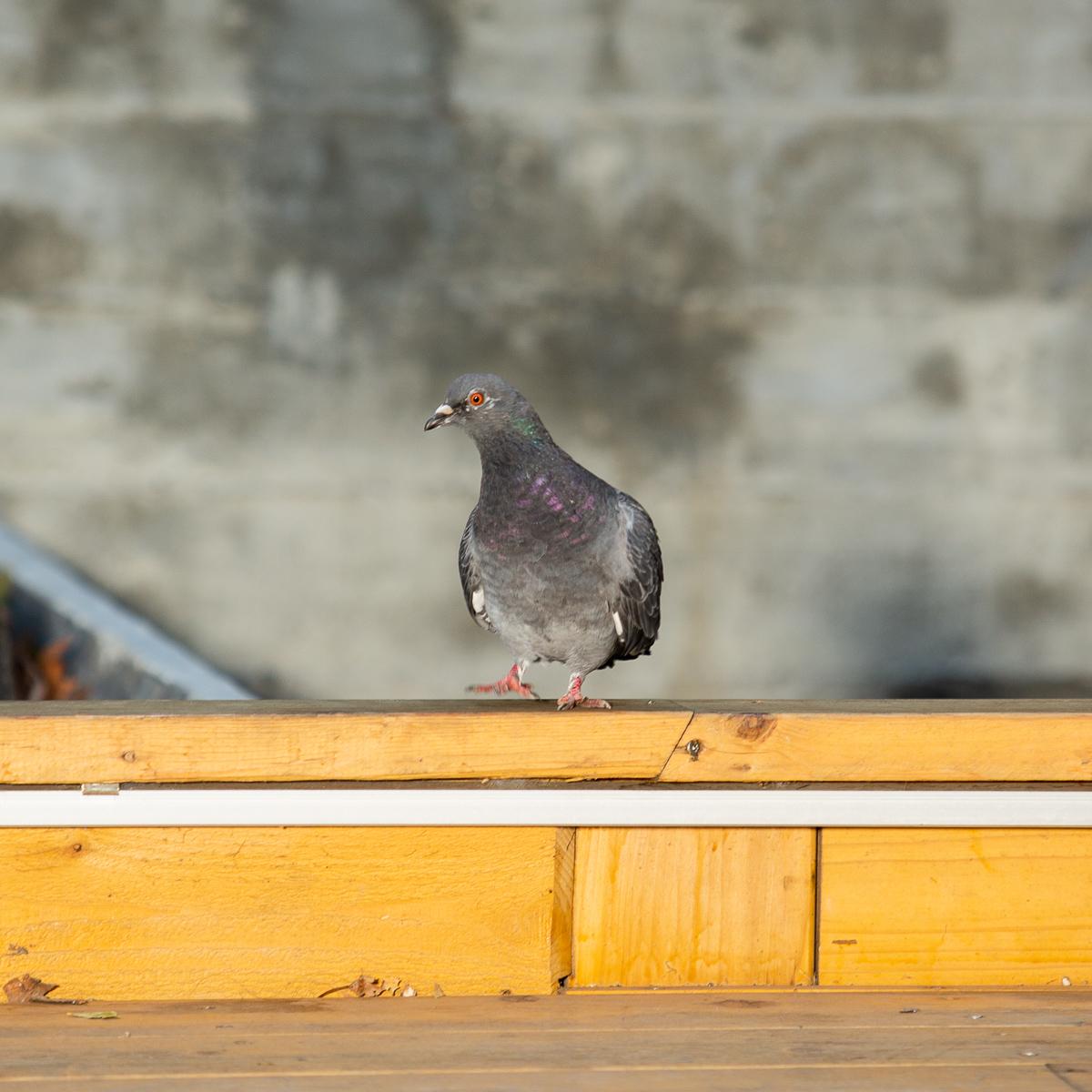 Black Sign - it's bird-Onbody-5760 x 3840-18.jpg