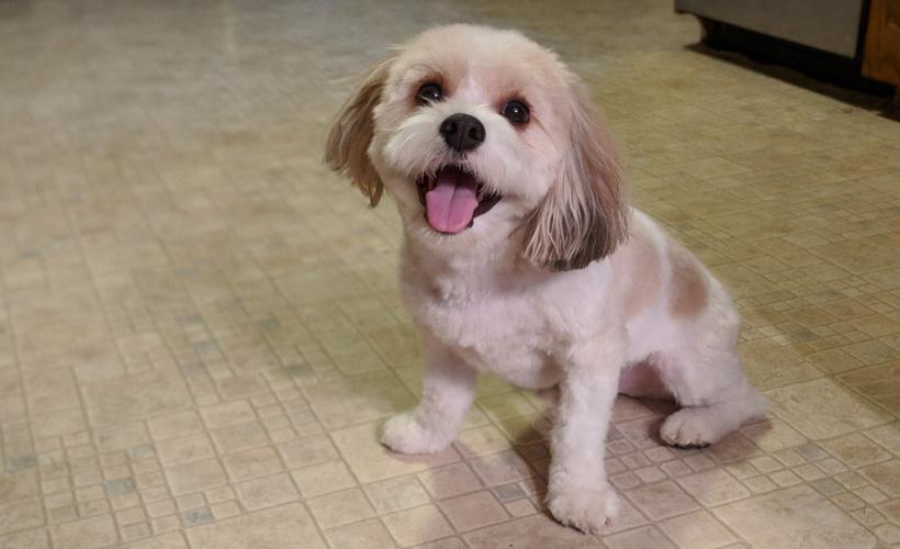cutestdog.jpg