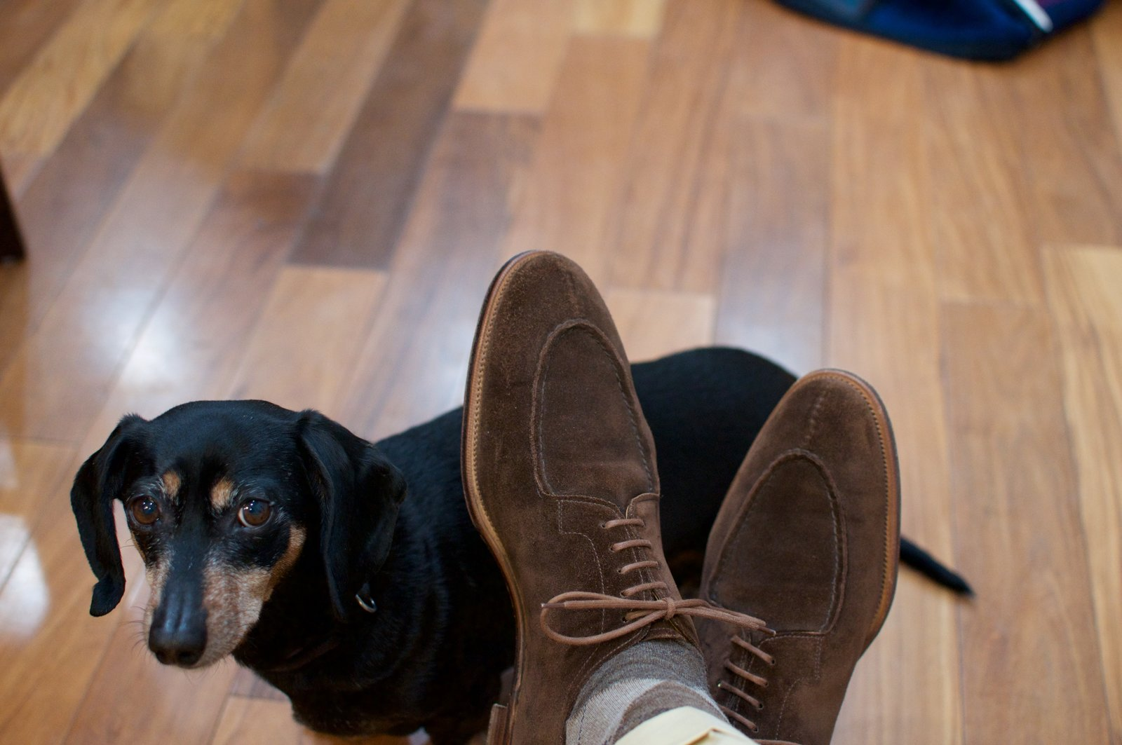 Edward Green Otter Suede Dovers - 2020-02-19 - 5.jpg