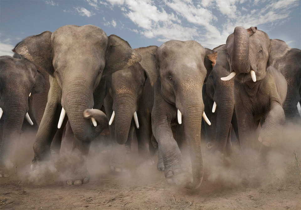 elephant-stampede.jpg