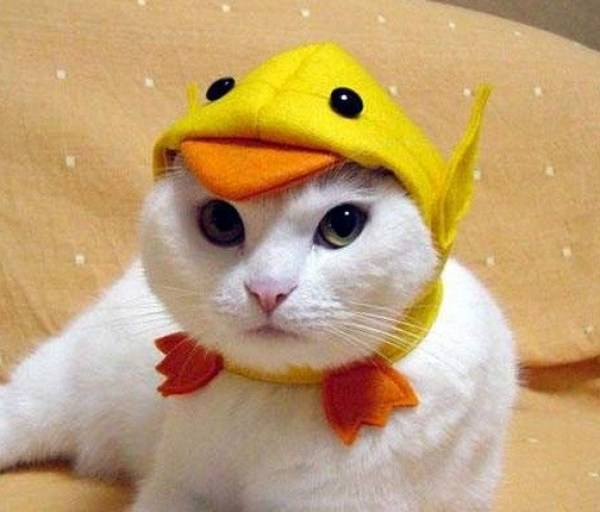 The-World's-Top-10-Best-Images-of-Cats-Wearing-Easter-Bonnets-2.jpg