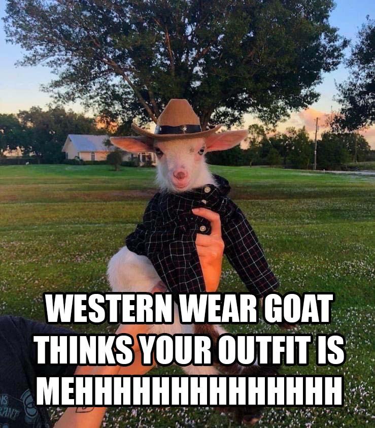 westernweargoat.jpg