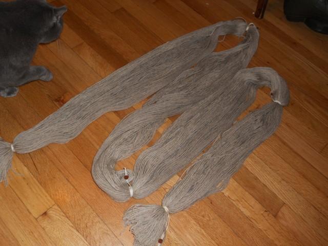 warpandcat.jpg