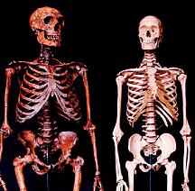 skeletons-216.jpg