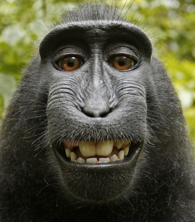 Macaque-Selfie-2.jpg